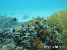 PEN Liteと防水ハウジングによる水中写真 美しいサンゴ礁