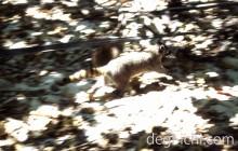 デジタル一眼レフカメラの表現 背景に動きをつけた写真