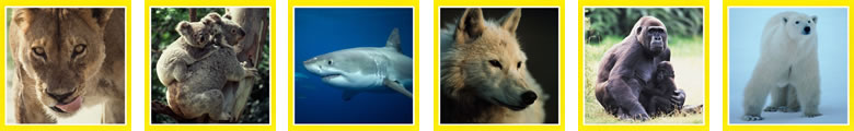 ナショナルジオグラフィックの見てみたい自然・動物写真・映像DVD