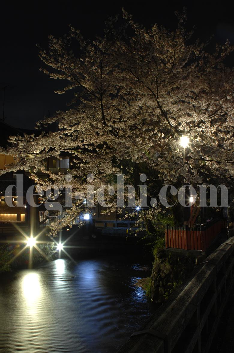 サクラの写真画像 夜桜(京都の見所・名所・スポット情報 祇園)