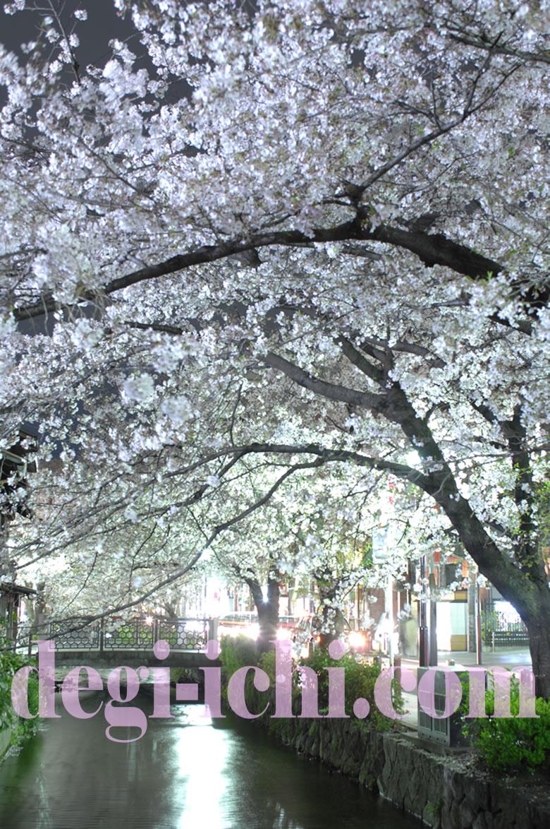 サクラの写真画像 夜桜(京都の見所・名所・スポット情報 木屋町)