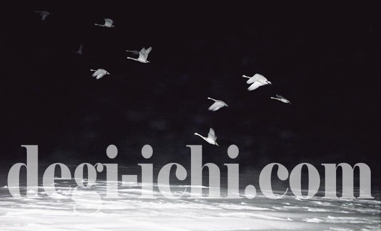 無料写真:白鳥の画像(北海道)
